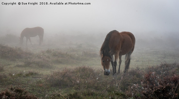 New Forest Ponies in the mist  Canvas print by Sue Knight