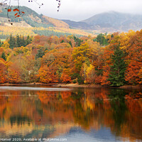 Buy canvas prints of Perthshire Amber by Stephen Hamer