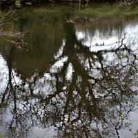 Buy canvas prints of Tree Reflection by Stephen Hamer