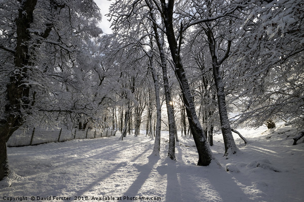 Winter Woodland in the North Pennines Canvas print by David Forster