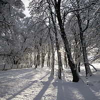 Buy canvas prints of Winter Woodland in the North Pennines by David Forster