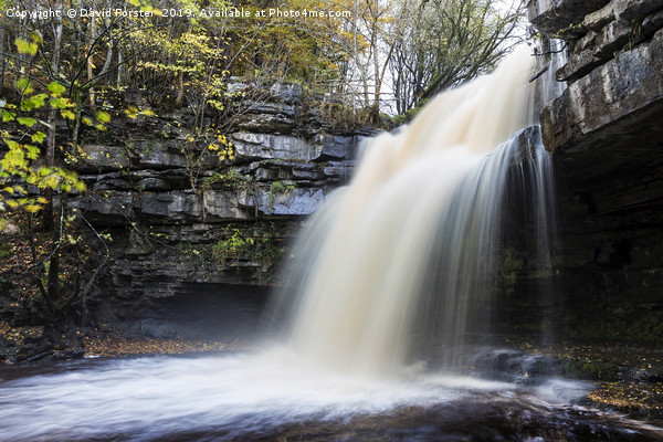 Summerhill Force and Gibson's Cave in Autumn Canvas Print by David Forster