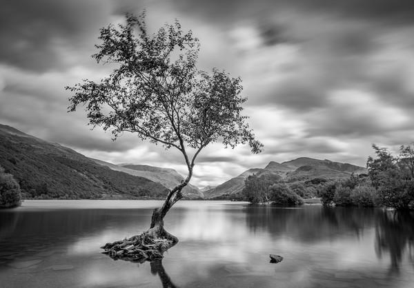 The Lone Tree, Llyn Padarn, Llanberis Canvas print by David Schofield
