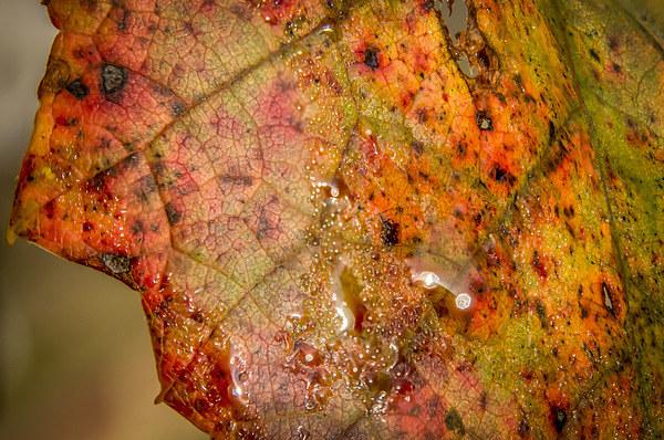 Autumn colour Acrylic by Gary Schulze