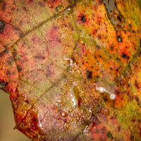 Buy canvas prints of  Autumn colour by Gary Schulze