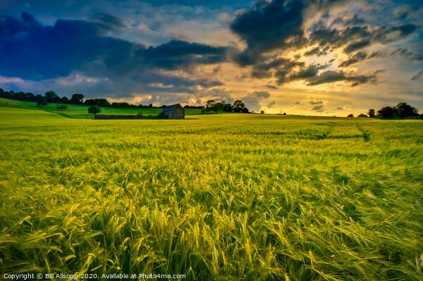 Barley sunset. Framed Mounted Print by Bill Allsopp