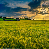 Buy canvas prints of Barley sunset. by Bill Allsopp
