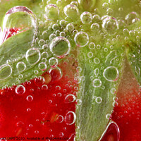 Buy canvas prints of Strawberries in water close up by Simon Bratt LRPS