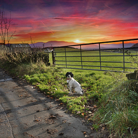 Buy canvas prints of  sunset walk by Del Fox
