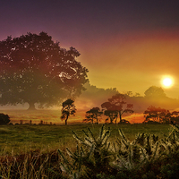 Buy canvas prints of  sunset trees by Fox Images