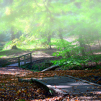 Buy canvas prints of Autumn morning by Fox Images