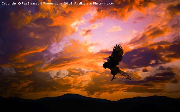Kestrel Bird Of Prey Canvas Print by Fox Images & Photography