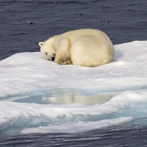 Sleeping Polar Bear Reflection Canvas print by Kevin Tappenden