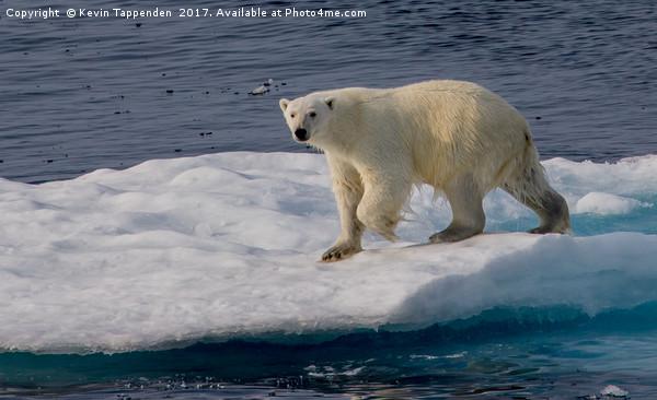 Polar Bear Canvas print by Kevin Tappenden