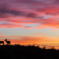Buy canvas prints of Red deer at sunset - silhouette  by Chris Warham