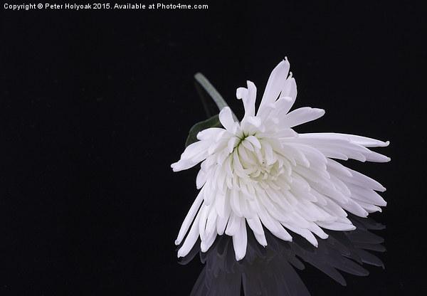 Chrysanthemum Reflection Canvas print by Peter Holyoak