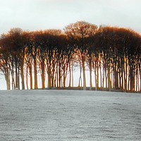 Buy canvas prints of The Coming Home Trees by Beryl Curran