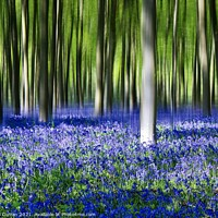 Buy canvas prints of Bluebell woods. by Beryl Curran