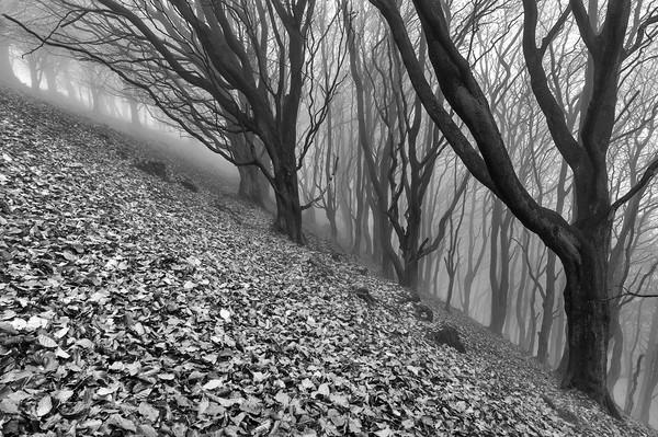 Vertigo. Black and White. Canvas Print by John Finney