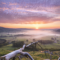 Buy canvas prints of Old Fallen Tree at sunrise. Peak District. by John Finney