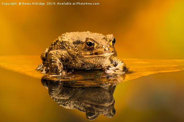 Common toad (Bufo Bufo) Acrylic by Beata Aldridge
