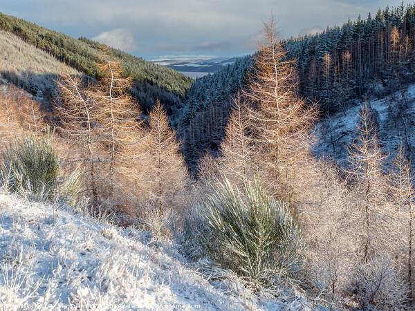 Snow in the Glen Print by Iain MacDiarmid
