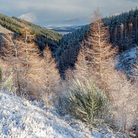Buy canvas prints of Snow in the Glen by Iain MacDiarmid
