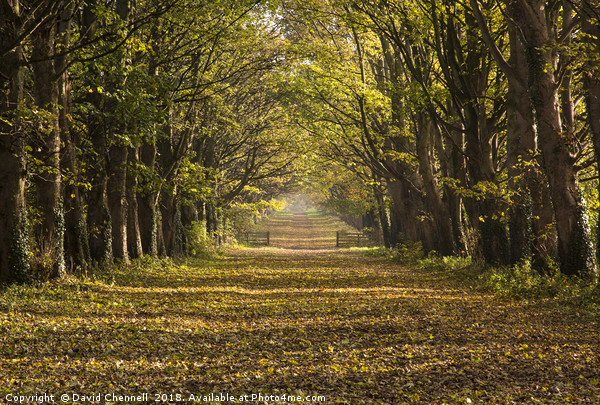 Autumnal Causeway Canvas print by David Chennell