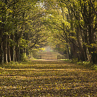 Buy canvas prints of Autumnal Causeway by David Chennell