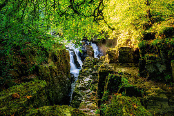 Sunshine over the Black Linn waterfall Canvas Print by Miles Gray