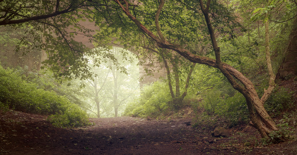 Misty morning at Roslin Glen Canvas Print by Miles Gray