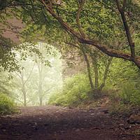 Buy canvas prints of Misty morning at Roslin Glen by Miles Gray