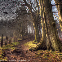 Buy canvas prints of HDR of Trees in Ousbrough Wood by Ray Pritchard