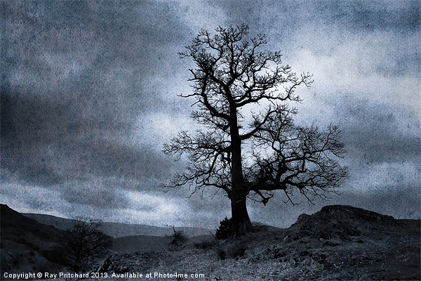 Dark Tree Canvas print by Ray Pritchard
