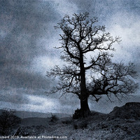 Buy canvas prints of Dark Tree by Ray Pritchard