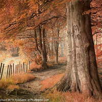 Buy canvas prints of Ousbrough Woods Texturised by Ray Pritchard