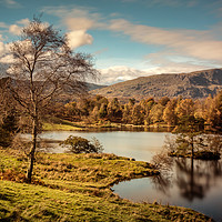 Buy canvas prints of Tarn Hows by Ray Pritchard