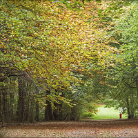 Buy canvas prints of Woodland Walk by Linda Corcoran LRPS CPAGB