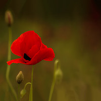 Buy canvas prints of Lest We Forget by Linda Corcoran LRPS CPAGB