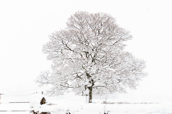 Winter Tree  Canvas print by chris smith
