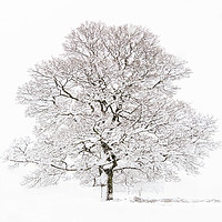 Buy canvas prints of Winter Tree  by chris smith