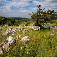 Buy canvas prints of Ingleborough Yorkshire Dales  by chris smith