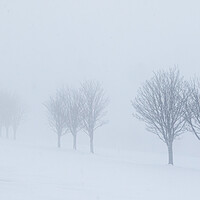 Buy canvas prints of Trees in the snow by chris smith