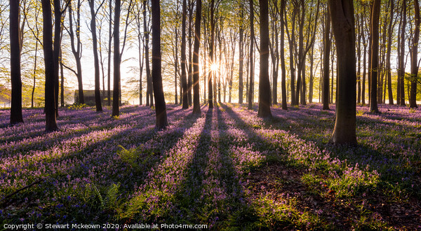 Bluebell Sunrise Framed Print by Stewart Mckeown