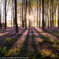Buy canvas prints of Bluebell Sunrise by Stewart Mckeown