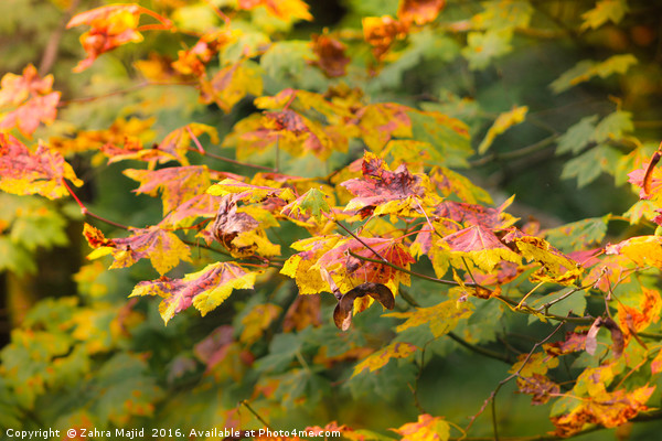 Natures Autumn Colour Palette Acrylic by Zahra Majid