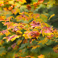 Buy canvas prints of Natures Autumn Colour Palette by Zahra Majid