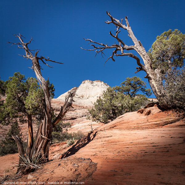 Desert Landscape with Trees Print by Peter O'Reilly