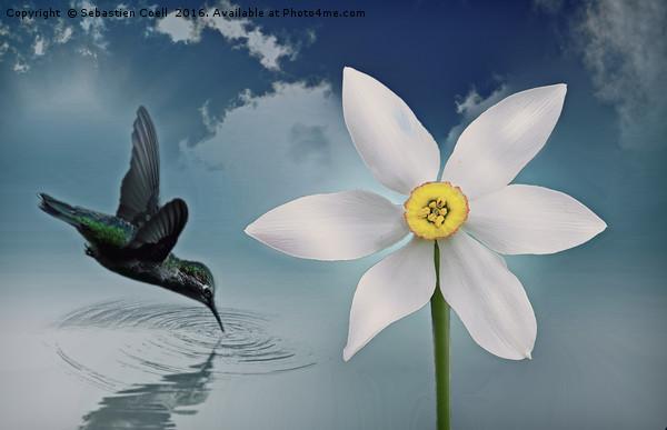 Flutter flower Canvas print by Sebastien Coell