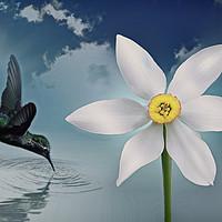 Buy canvas prints of Flutter flower by Sebastien Coell